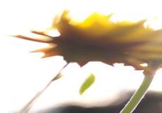 15 Artful Blooms