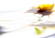 19 Artful Blooms