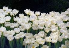 01 Floral Design