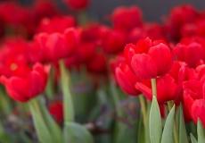 10 Floral Design
