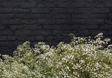 05 Floral Design