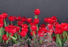 09 Floral Design