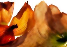 01 Floral Fusion