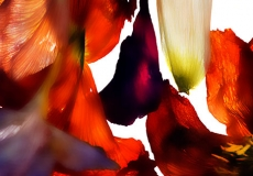03 Floral Fusion