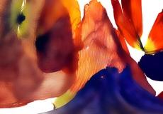 05 Floral Fusion