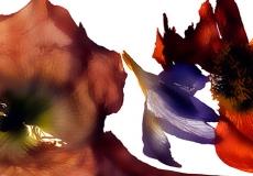 06 Floral Fusion