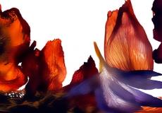 07 Floral Fusion
