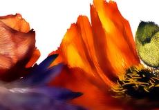 08 Floral Fusion