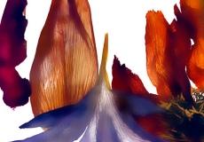 09 Floral Fusion