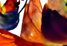 10 Floral Fusion