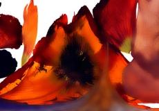 11 Floral Fusion