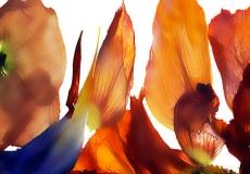 16 Floral Fusion