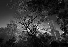 02 Hyde Park Sydney