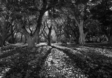 04 Hyde Park Sydney