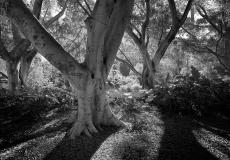 05 Hyde Park Sydney