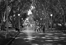 06 Hyde Park Sydney