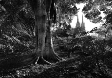 07 Hyde Park Sydney