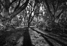 09 Hyde Park Sydney
