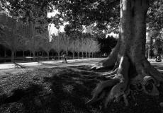 14 Hyde Park Sydney