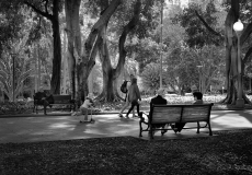 16 Hyde Park Sydney