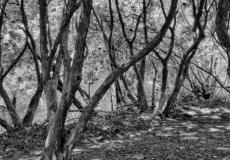 landscape mono # 2