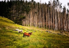 Irish Landscape 06