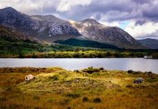 Irish Landscape 12