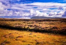 Irish Landscape 19