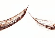 08 Leaves