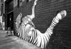 Melbourne Mono 2019 #144