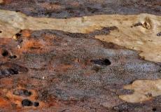 06 natures texture