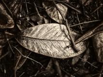 winter wood # 10