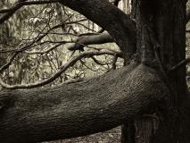 winter wood # 12