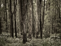 winter wood # 13