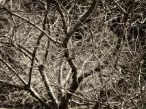 winter wood # 14