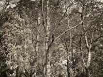 winter wood # 15