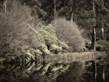 winter wood # 16