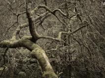 winter wood # 17