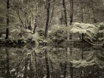 winter wood # 18