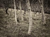 winter wood # 4