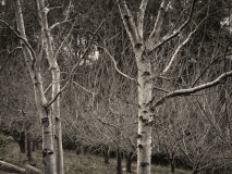 winter wood # 5