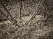winter wood # 6