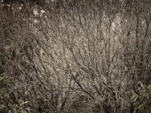 winter wood # 7