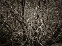 winter wood # 8