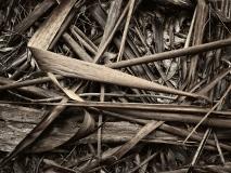winter wood # 9