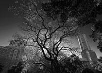 Hyde-Park-thumb