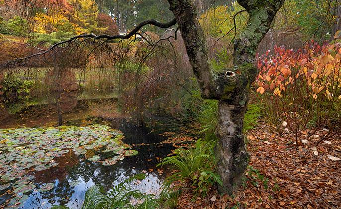 02 Seasons-Autumn VR Photo Art by Michael Collins