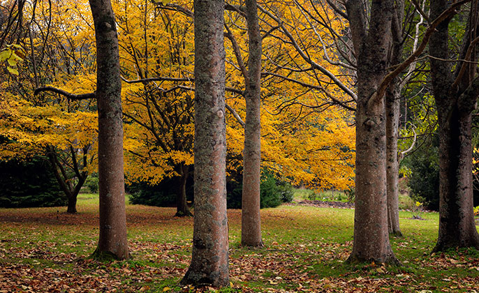 16 Seasons-Autumn VR Photo Art by Michael Collins