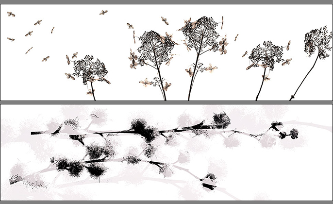 Leaves Collection of Photo Art by Michael Collins for VISUAL RESOURCE A