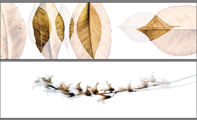 Leaves Collection of Photo Art by Michael Collins for VISUAL RESOURCE B